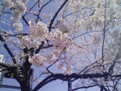 Fotos del Sakura 2009